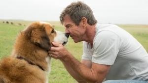 VIDEO: Denuncian indignante trato a perro de 'La Razón de estar contigo'
