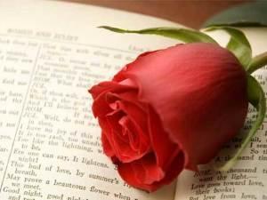 Los mejores 14 libros para regalar en San Valentín