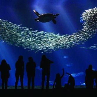Acuario de la Bahía, un lugar fascinante del Condado de Monterey, CA
