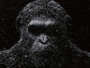 ¡Mira el tráiler final de 'El Planeta De Los Simios: La Guerra'!