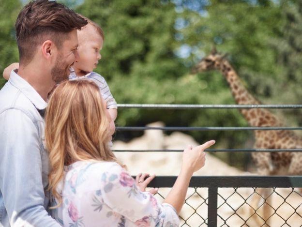 Visita el Zoológico de Dallas y muchas atracciones más con el CityPASS