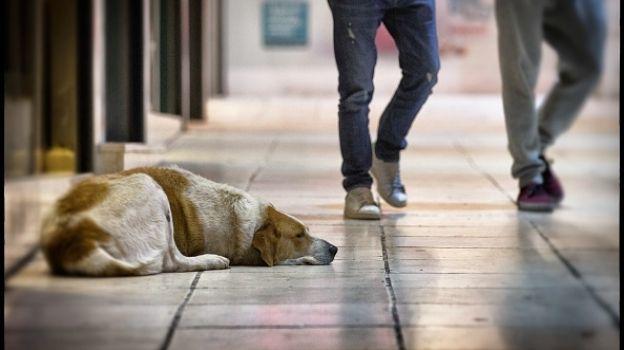 Campaña de hidratación de perros callejeros en Chihuahua