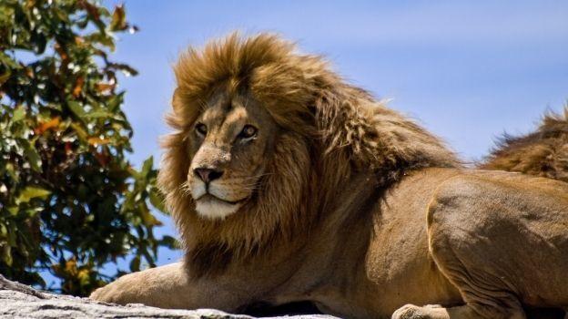 Dos años después de cazar al león Cecil matan a su hijo