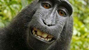 Cómo fue que esta selfie arruinó la carrera de un fotógrafo