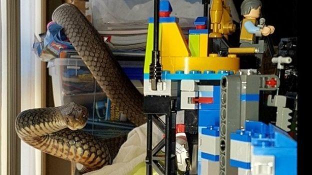 Mujer halla una de las serpientes más venenosas del mundo entre juguetes de su hijo