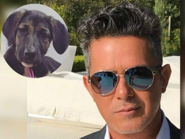 Alejandro Sanz llama 'Frida' a su nueva mascota en honor a México
