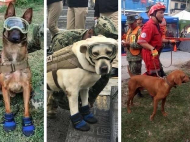 Los perros rescatistas que nos robaron el corazón