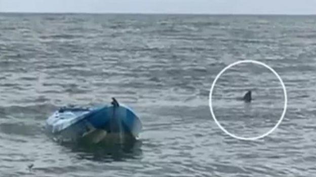 Padre salva a su hija de tiburón blanco gigante en Australia