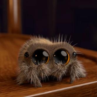 'Lucas': La araña más tierna del mundo