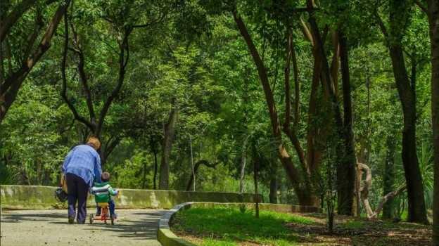 Continúan amenazas inmobiliarias en bosque de Chapultepec: ecologistas