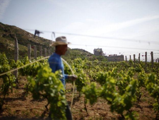 California resiente escasez de mano de obra migrante ante redadas del ICE
