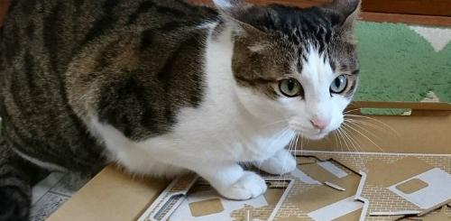 Así juegan los gatitos con Nintendo Labo