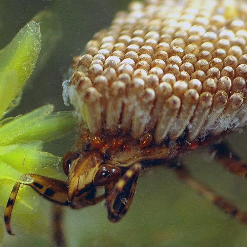 Insectos súmamente raros