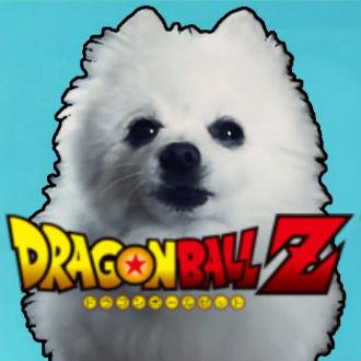 Perritos cantan openigns de Dragon Ball